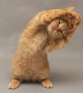 stretch cat pilates fun