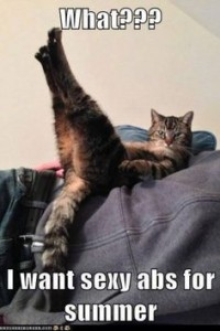 pilates sexy abs cat funny