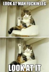 fuck cat leg pilates