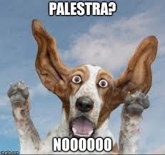 palestra funny dog
