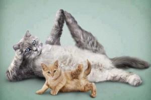 pilates cat side exercises