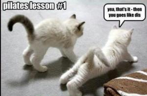 pilates lesson1 fun cat