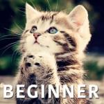 Beginner pilates video