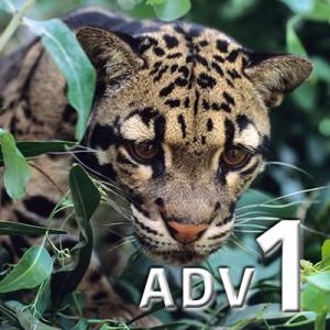 adv 1