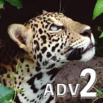 ADVANCED 2 (eng)
