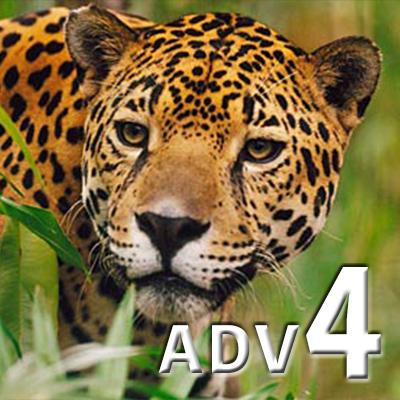 ADVANCED 4 (eng)