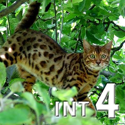 INTERMEDIATE 4 (eng)