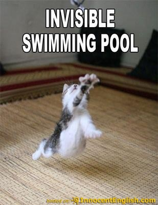 swimming cat pilates
